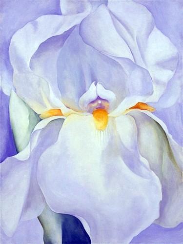 iris-bianco-n-7